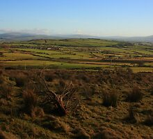 On Fearn Hill by Adrian McGlynn