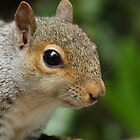 Squirrel Portrait by Jonathan Cox