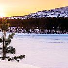 Lone Pine Tree at Sunrise by KarenMcDonald