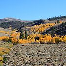 Autumn atop Peavine Mountain, Reno Nevada USA by Anthony & Nancy  Leake