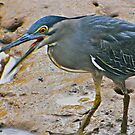 HERON CATCHES MANTIS by NICK COBURN PHILLIPS
