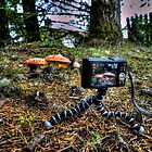 The Set-Up ~ Amanita muscaria by Charles & Patricia   Harkins ~ Picture Oregon