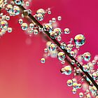 Smoking Pink Drops II by Sharon Johnstone