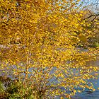 Autumn colours, riverside walk, November 2011 by Hugh McKean