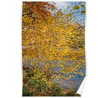 Autumn colours, riverside walk, November 2011 Poster