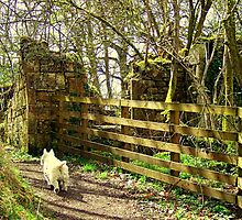Follow That White Dog ! by printerbill