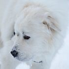 Great Pyrenees by michaelroman