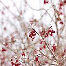 Winter berries by AbigailJoy