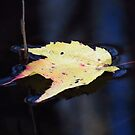 Leaf on Water 8 by ChuckBuckner