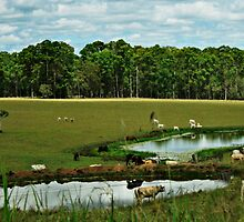 Two dams and green pastures by myraj