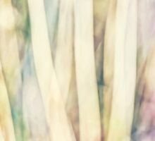 Pastel Forest Wild Grasses Photographic Abstract by Natalie Kinnear