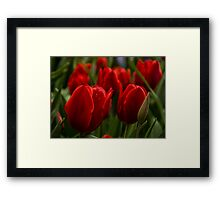Vivid Red Tulip Garden Framed Print