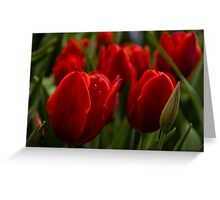 Vivid Red Tulip Garden Greeting Card