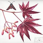 Maple and Burnet moth by Helen Lush