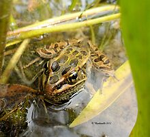 Frog in the Swamp! by Barberelli