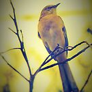 Mockingbird in gold sunset by ♥⊱ B. Randi Bailey