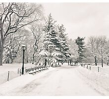 Central Park Winter Trees Photographic Print