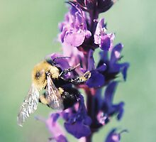 Buzzing Around 3 by Emily Rose
