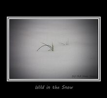 Wild in the Snow by Otto Danby II