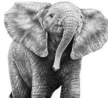 Baby African Elephant by Lorna Mulligan