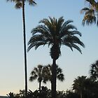 Palm Trees  by kattrzonca15