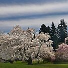 A Winterthur Spring by cclaude