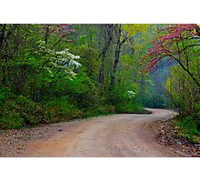 Spring Curves Photographic Print