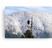 Adult Bald Eagle (Haliaeetus leucocephalus) Metal Print