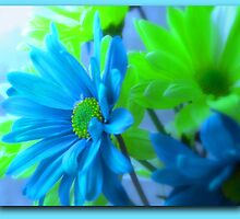A blend of Teal and Green Daisies by Regina Taylor