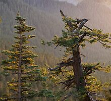 Late Evening Light at Mount Rainier National Park by Michael Russell