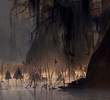 Dawn at Caddo Lake by Brenda Moseley