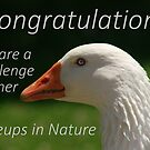 Banner Challenge  ...  Closeups in Nature by myraj