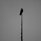 Crow Lollipop by Rick Magnell