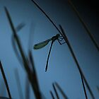 Dragonfly Silhoutte by Claire Walsh