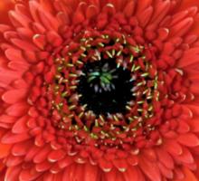 orange gerbera daisy flower floral sticker Sticker