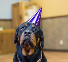 Happy Birthday from a Rottweiler by TheJill