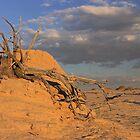 Desert Landscape 5 by Dave Cauchi