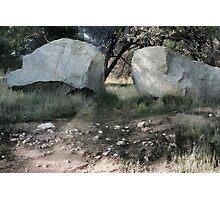 A Sunlit Path Photographic Print