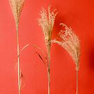 feather reed on red by 7horses