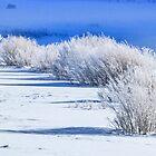 Frozen bushes--distant bison by Linda Sparks