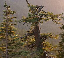 Evening Light at Mount Rainier National Park by Michael Russell