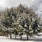 Snow Job by Monnie Ryan