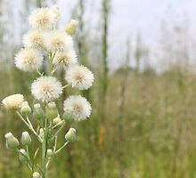 The beauty of weeds by Maree  Clarkson