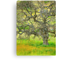 Wildflowers Under Oak Tree - Spring In Central California Canvas Print