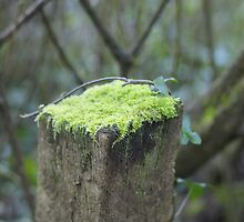 Mossy cap by MagsArt