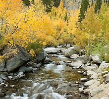 Fall Colors And Rushing Stream - Eastern Sierra by Ram Vasudev