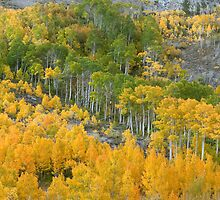 Wild and Beautiful - Aspens In Autumn Eastern Sierra California by Ram Vasudev