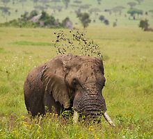 Elephant mud bath by Philip Alexander