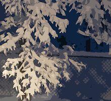 snow branch. . .  by Cindy Rubino