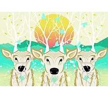 Roots To Grow and Wings To Fly (Three Deer New Dawn) Photographic Print